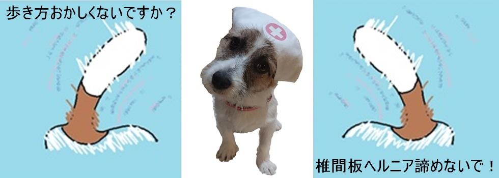 犬の整体(マッサージ、カイロプラクティック)|愛知県名古屋市 名東区 藤が丘徒歩10分